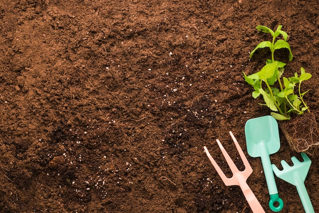 Flache lage von pflanzen- und gartengeräten mit copyspace