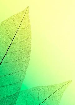 Flache lage von transparenten blättern mit farbigem farbton und kopierraum