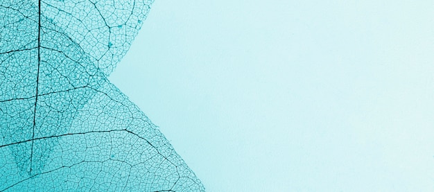 Flache lage von transparenten blättern mit farbigem farbton