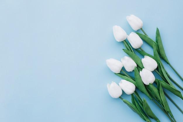 Flache lage von weißen tulpen auf blauem hintergrund mit kopienraum auf dem links