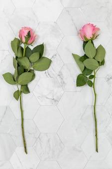 Flache lage von zwei rosen