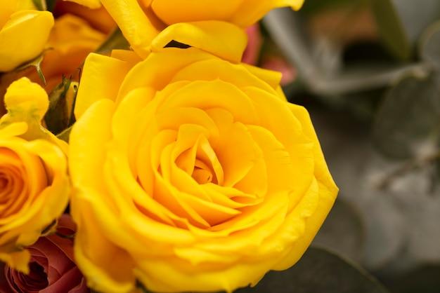 Flache lage wunderschön geblühter bunter rosenblüten