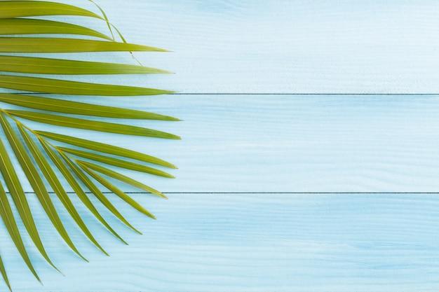 Flache lagekokosnuss verlässt auf blauem bretterboden, draufsicht und kopienraum, sommerkonzept