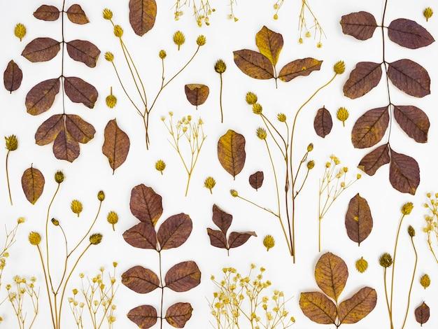Flache laiengruppe von blättern und blüten