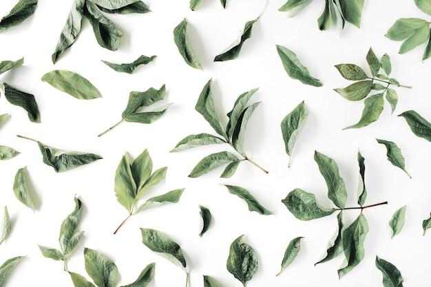 Flache legetextur mit grünen blättern Premium Fotos