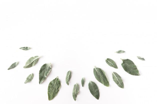 Flache rahmenform mit grünen zweigen, blättern und blütenblättern auf weißem hintergrund