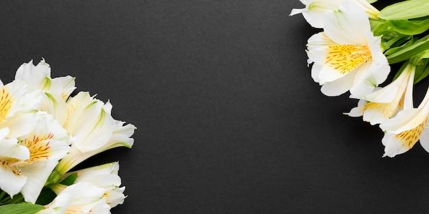 Flache weiße alstroemeria-blumensträuße mit kopierraum