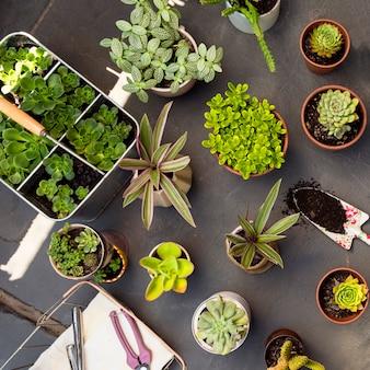 Flache zusammensetzung von pflanzen in töpfen
