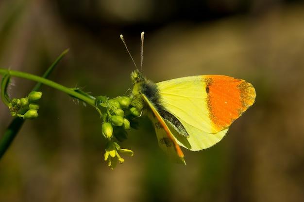 Flacher fokus eines schönen gelben und orange schmetterlings auf der pflanze