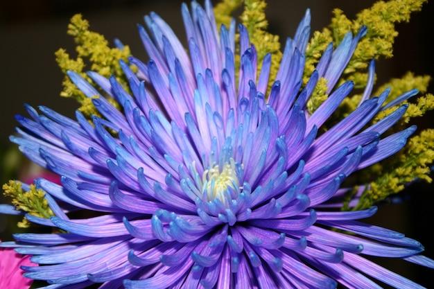 Flacher fokusschuss einer lila blume