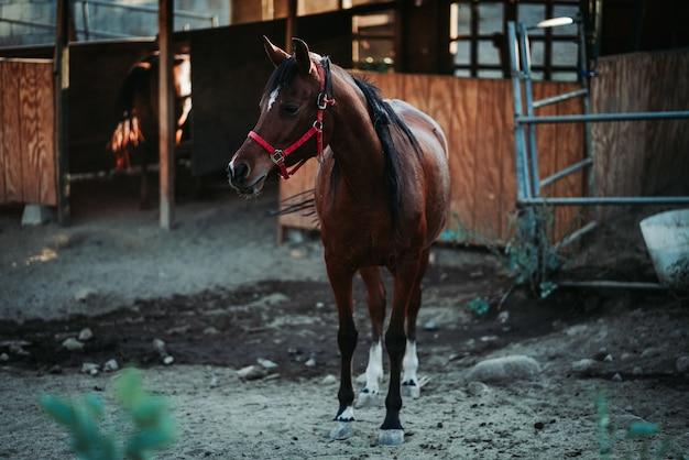 Flacher fokusschuss eines braunen pferdes, das ein rotes geschirr trägt