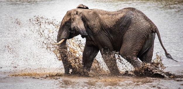 Flacher fokusschuss eines elefanten, der wasser auf einen see spritzt