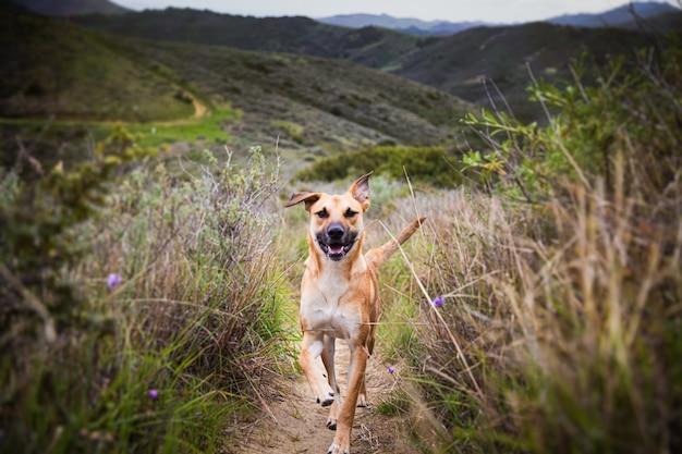 Flacher fokusschuss eines hundes, der auf dem weg läuft