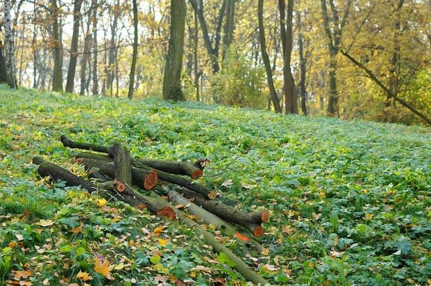 Flacher fokusschuss von holzstämmen, die auf einem grasboden im wald gelegt werden
