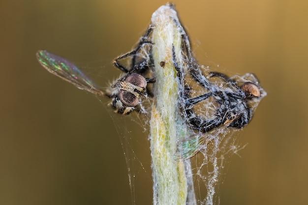 Flacher fokusschuss von insekten, die in einem spinnennetz gefangen sind