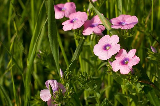 Flacher fokusschuss von rosa blumen