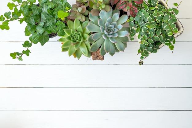 Flacher laienfahnenkopierraum der trending-sammlung verschiedener zimmerpflanzen weißer hölzerner hintergrund.