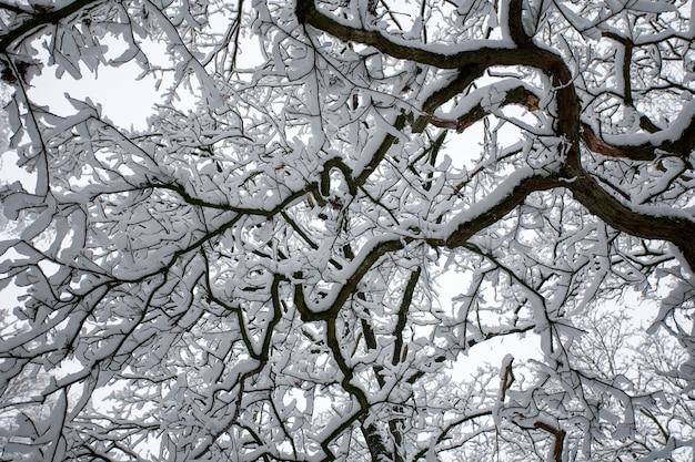 Flacher winkelschuss der zweige eines baumes, der im winter mit schnee bedeckt ist