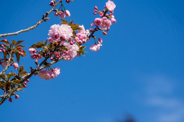 Flacher winkelschuss einer blühenden blume unter einem blauen himmel