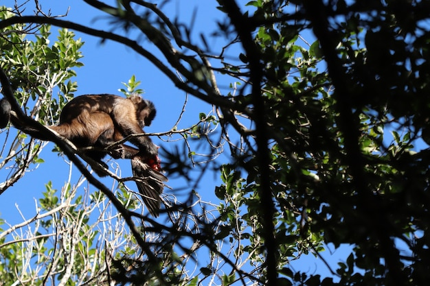 Flacher winkelschuss eines affen, der einen vogel auf dem ast eines baumes in einem wald jagt