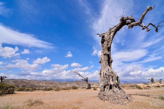 Flacher winkelschuss eines toten baumes in einem wüstenland mit einem klaren blauen himmel