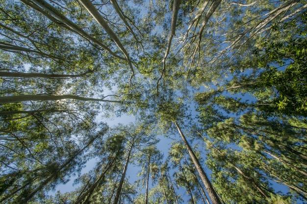 Flacher winkelschuss von bäumen im wald