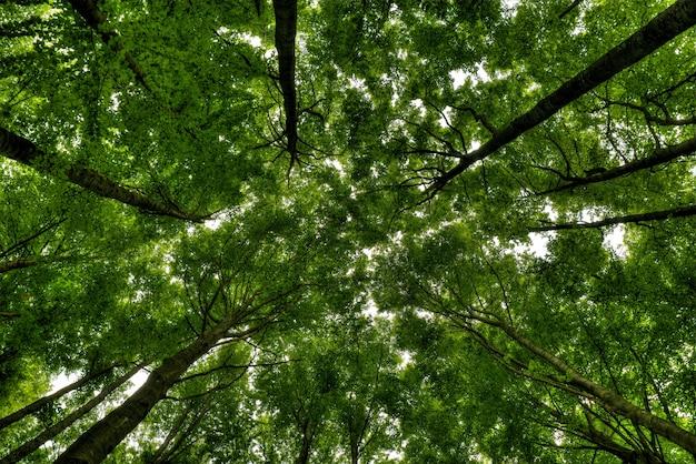 Flacher winkelschuss von hohen bäumen in einem schönen grünen wald