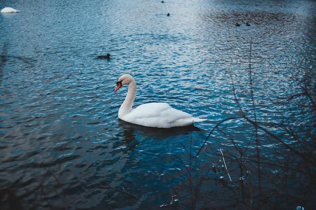 Flaches fokusfoto des schwans auf dem gewässer