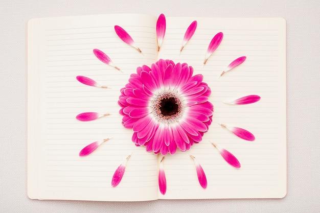 Flaches rosa gänseblümchen auf notizbuch legen