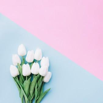 Flachlage des hübschen Tulpenblumenstraußes auf blauem und rosa Hintergrund mit Raum auf die Oberseite