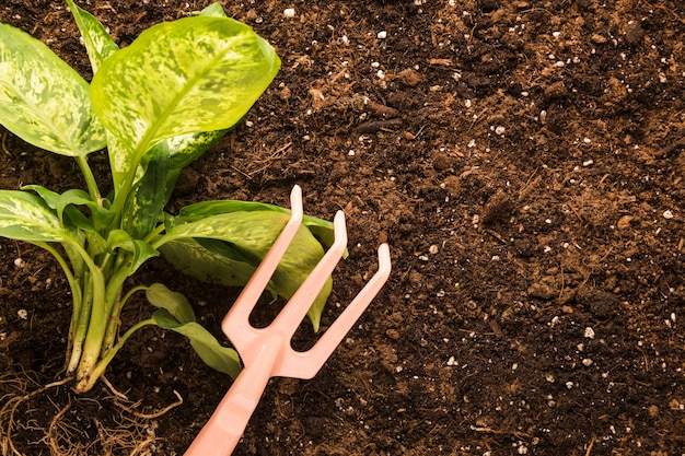 Flachlage von pflanze und rechen