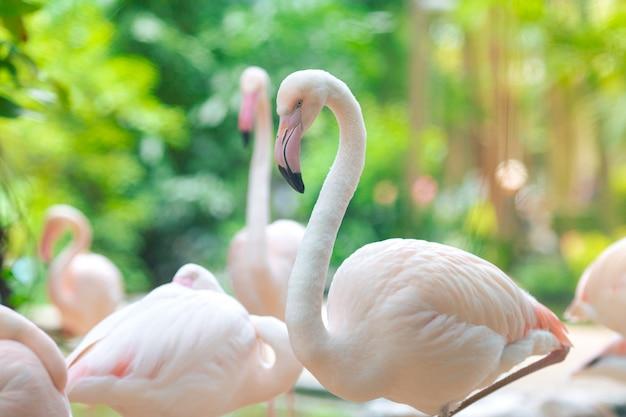 Flamingo herden