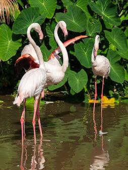 Flamingo ist der schönste der welt