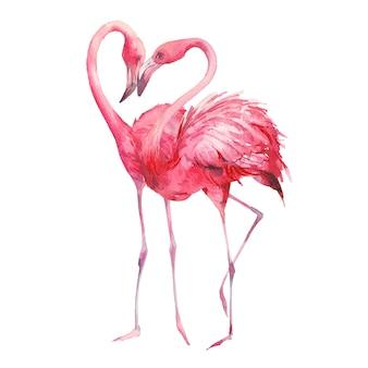 Flamingo verliebt. aquarellkunst. handgemalte helle exotische vögel, die lokal küssen
