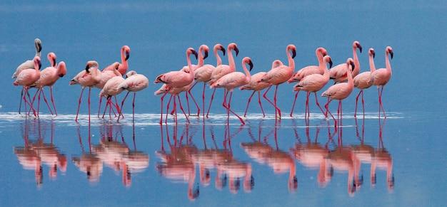 Flamingos auf dem see mit reflexion