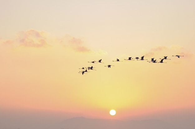 Flamingos im flug vögel im himmel