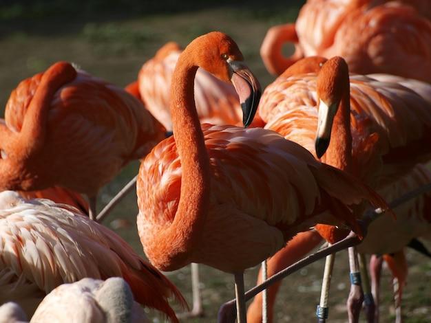 Flamingos in der natur