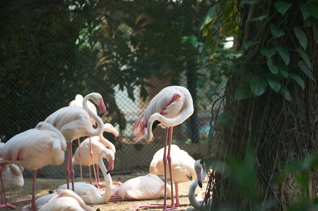 Flamingos stehen an land und sonnenlicht mit schattigen bäumen und einem netz hinter sich im zoo