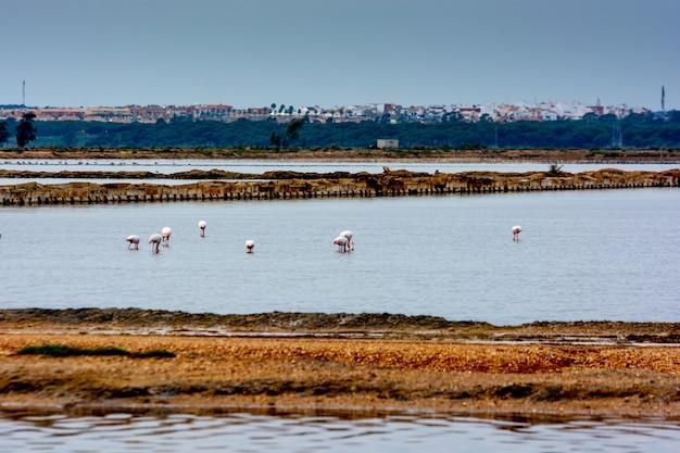 Flamingovogel im wasser