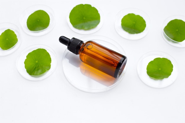 Flasche ätherisches öl mit frischen grünen centella asiatica blättern in petrischalen auf weißem hintergrund.