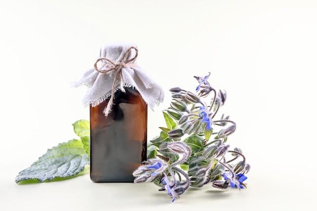Flasche boragoblütenöl und ein zweig borago