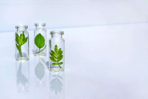 Flaschen mit kräutern für natürliche ätherische öle und biokosmetik
