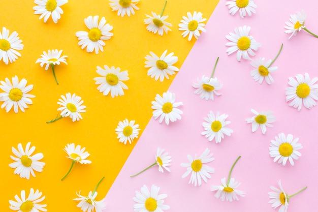 Flat lay gänseblümchen anordnung