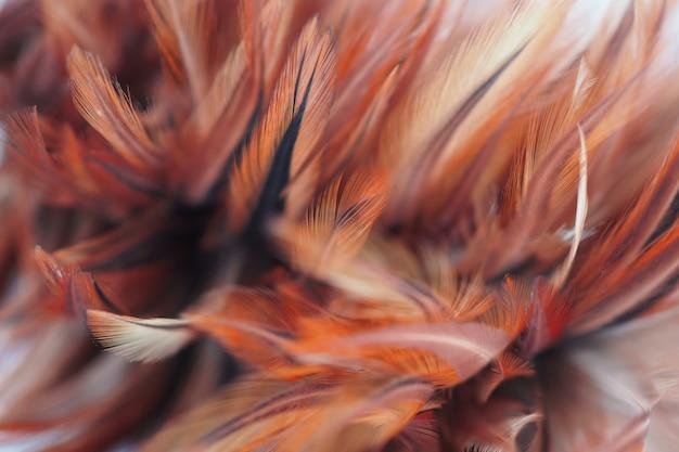 Flaumig von den hühnerfedern im weichen und unschärfearthintergrund, abstrakte kunst