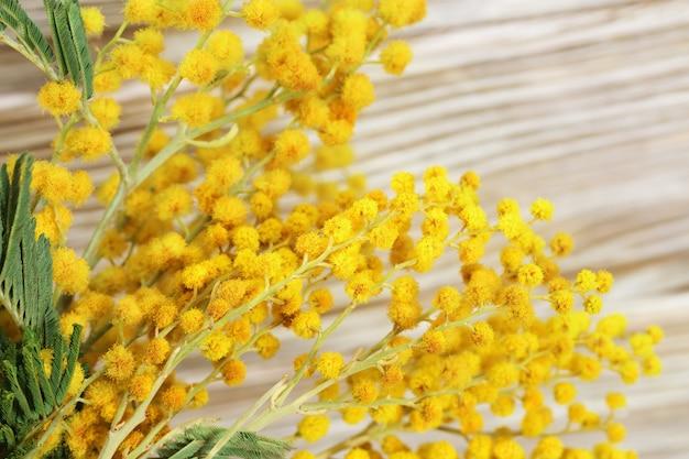 Flaumige gelbe blumen der mimosennahaufnahme auf einer unscharfen holzoberfläche mit copyspace. blumenhintergrund. tiefenschärfe.