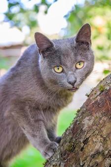 Flaumige katze sitzt auf einem baumast.