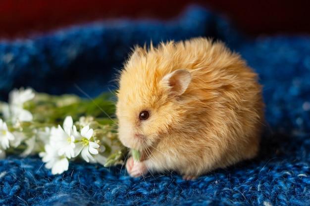 Flaumiger hamster mit blumen auf blau