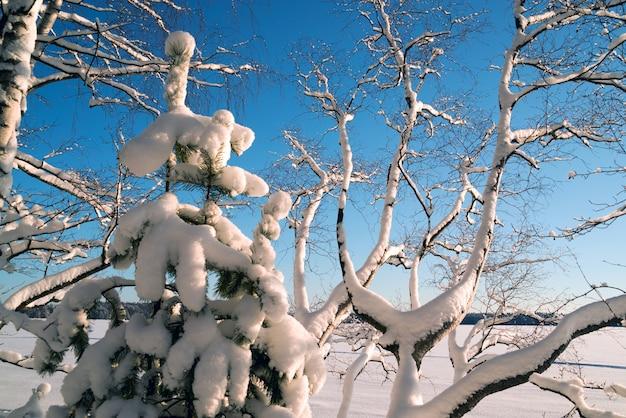Flaumiger weißer schnee auf den bäumen im wald