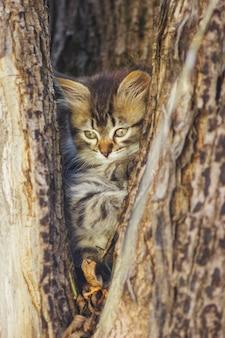 Flaumiges kätzchen allein in der höhle eines baums im sommer