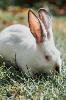 Flaumiges weißes kaninchen, das im gras sich versteckt